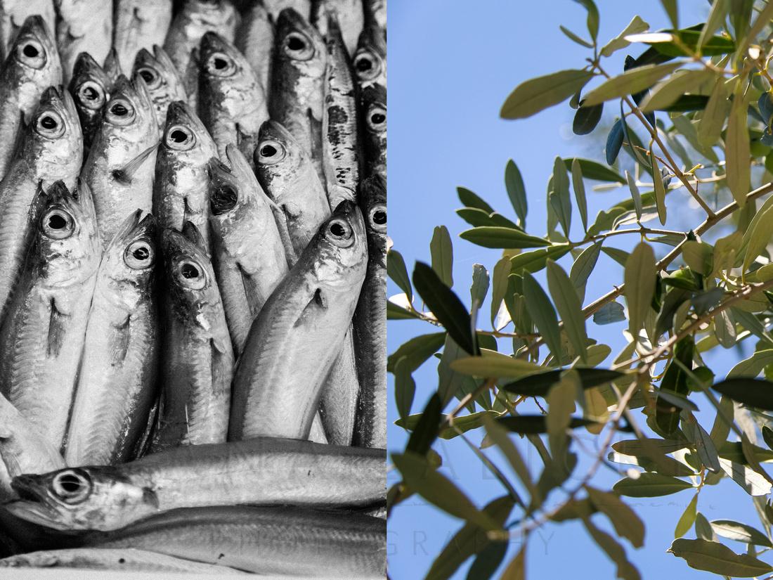 Sardines/Olive Tree